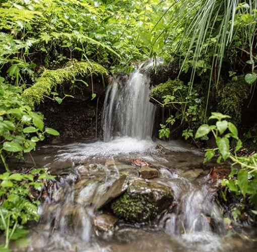 Wasserfall Quelle im Wald