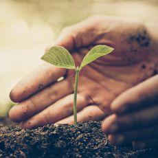 Hand schützt eine kleine Pflanze