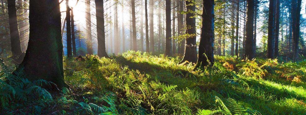 Waldlichtung in Niedersachsen