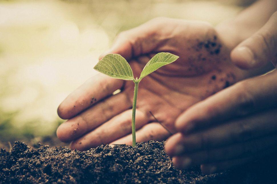 Pflanzensetzling in der Erde der von zwei Händen umfasst wird