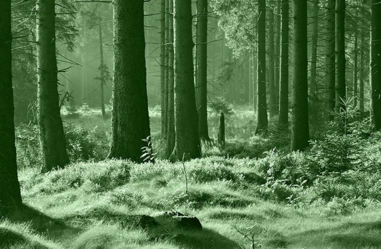 Wald mit Grünfilter