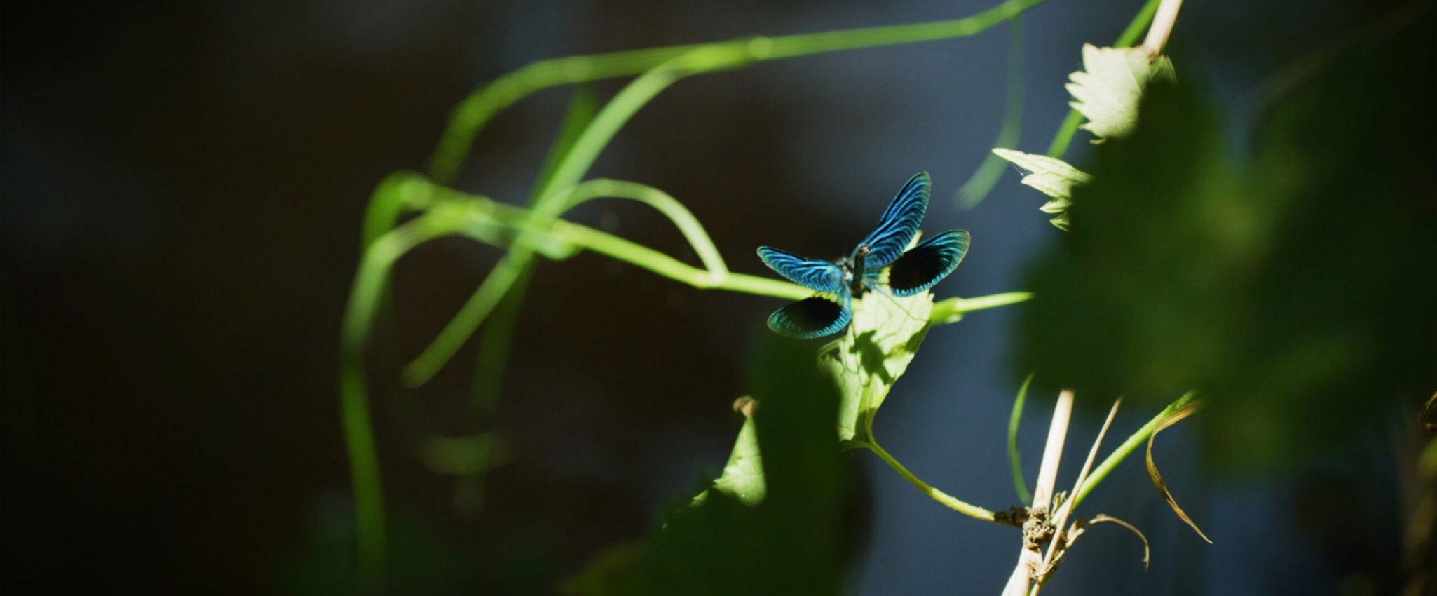blauer Schmetterling sitzt auf einer grünen Pflanze