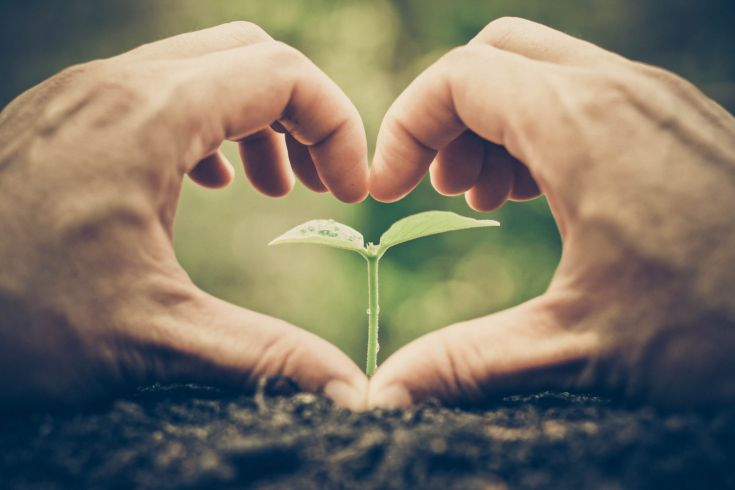 Pflanzensetzling in der Erde, der von zwei Händen umschlossen wird die ein Herz bilden
