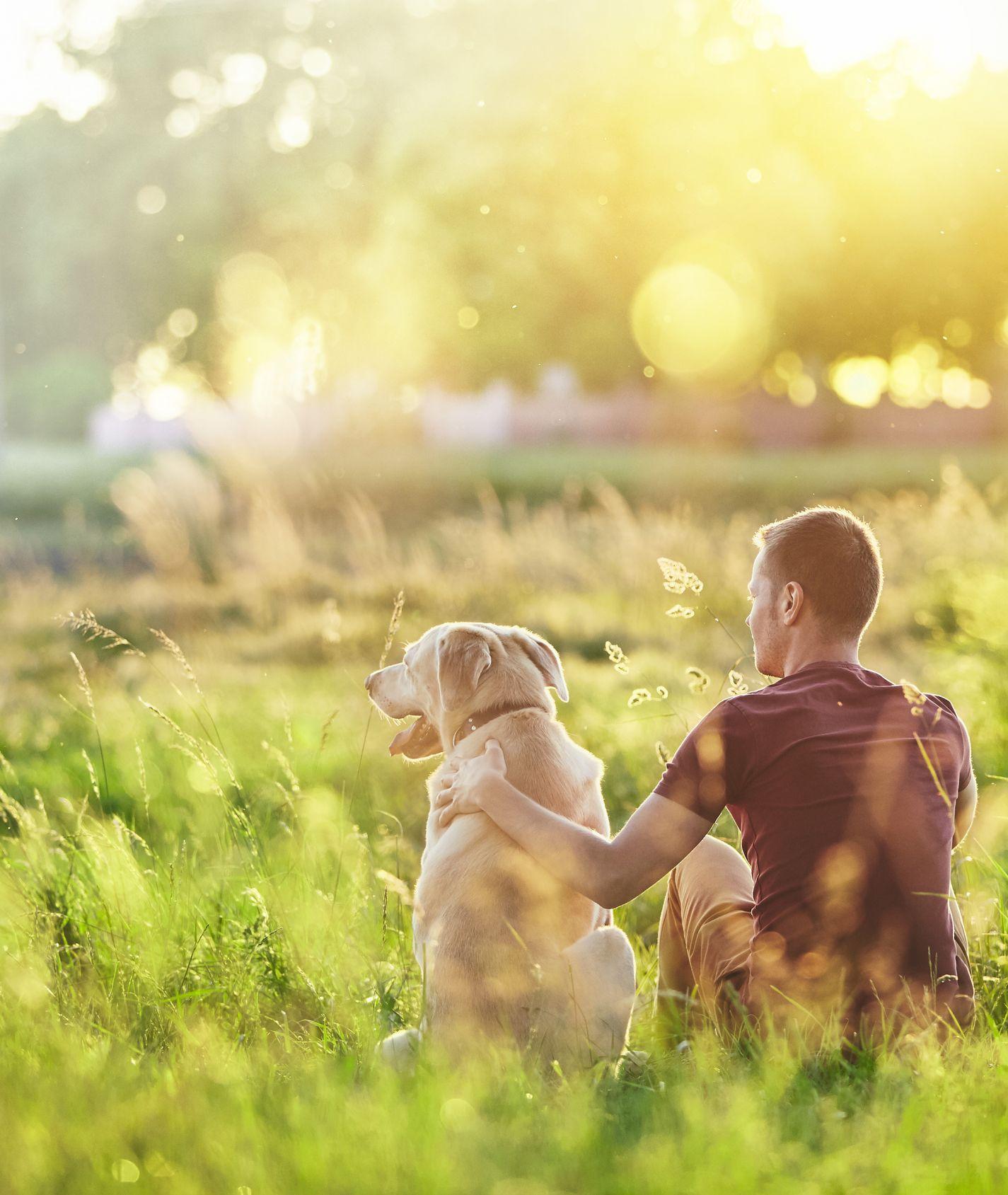 Mann mit Hund auf einem Feld gucken in die Ferne