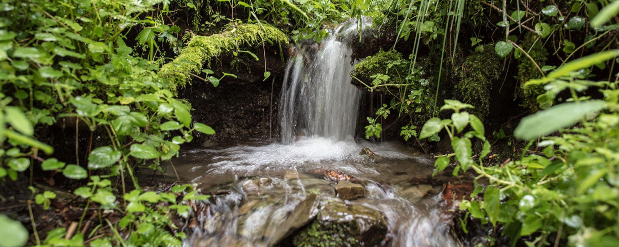 VILSA Quelle: eine sprudelnde Quelle im Wald