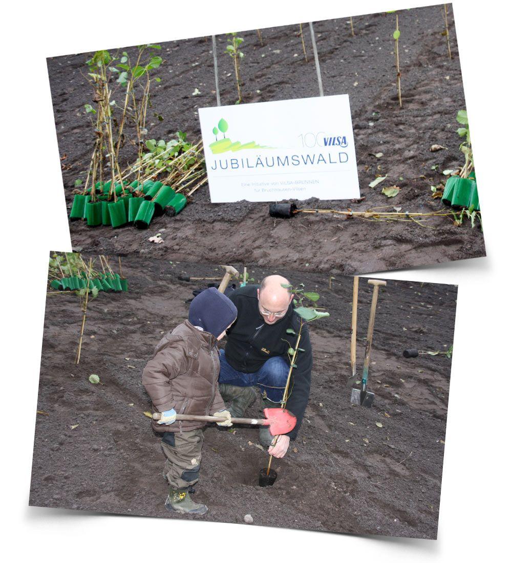 Die Bäume für den VILSA Jubiläumswald werden gepflanzt