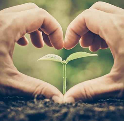 Hände formen ein Herz um einen Setzling