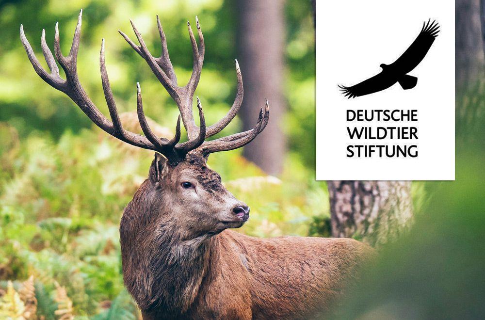 VILSA und die Deutsche Wildtier Stiftung